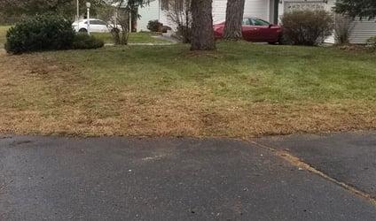 Salt Damaged Lawn