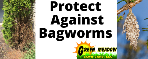 Bagworms in CT