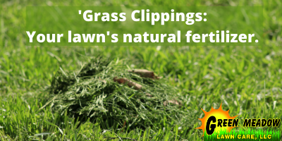 Grass-Clippings