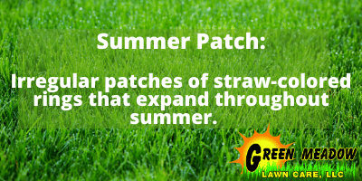 summer patch lawn diseases