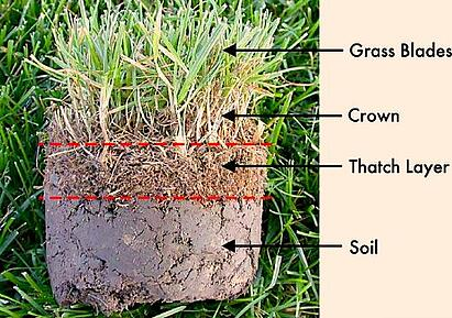 Thatch layer above soil