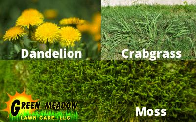 Weeds-Optimized