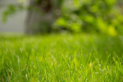Green Meadow Lawn Care Ellington, Connecticut