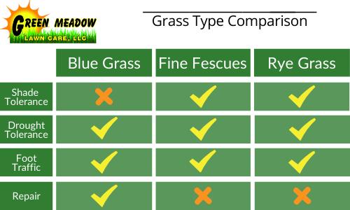 blue grass vs rye grass