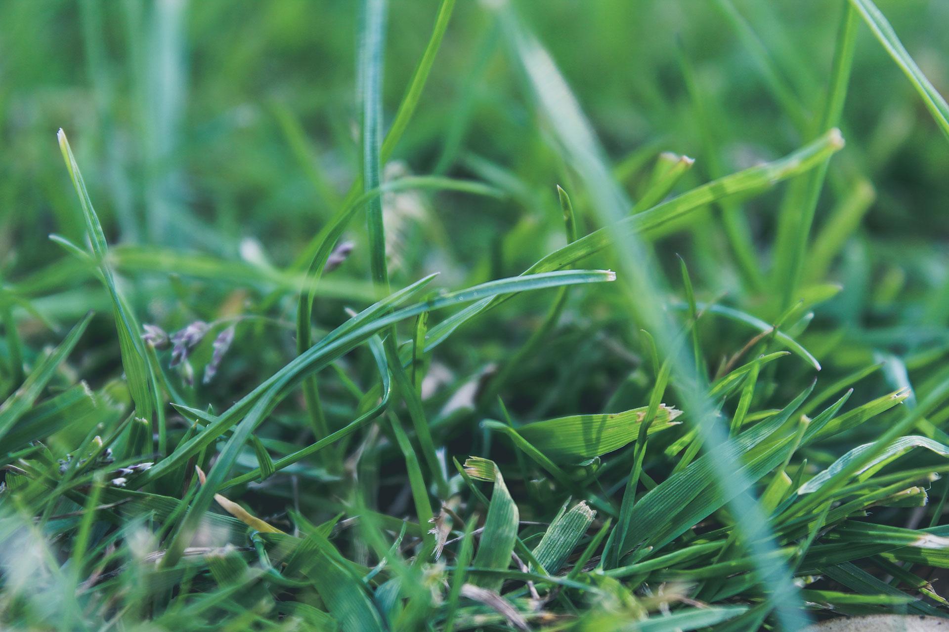 Preventing Crabgrass