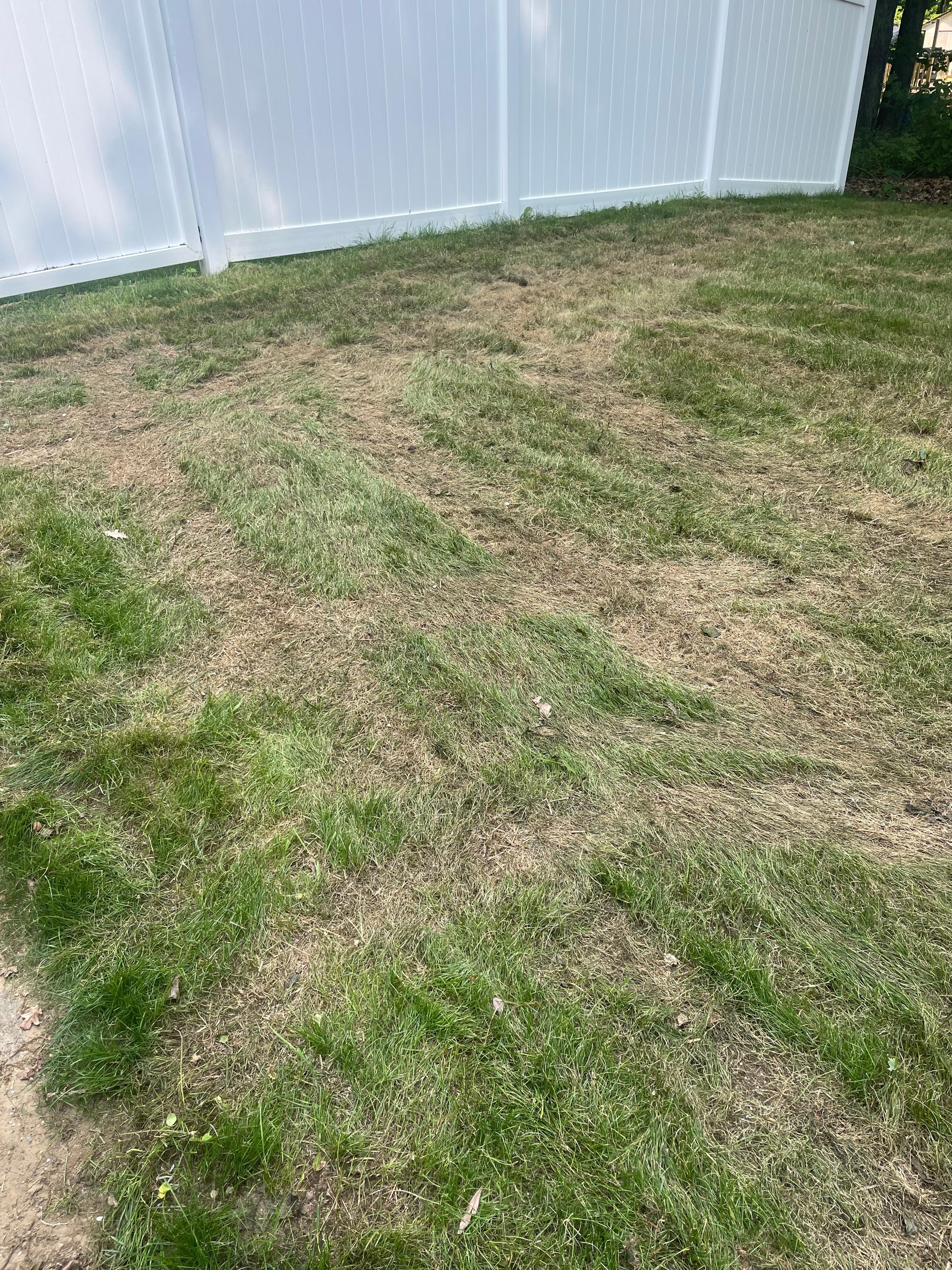 pythium blight fungicide